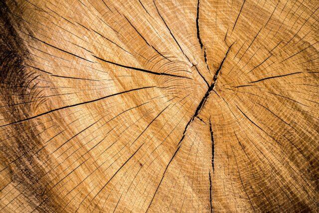 De stærkeste træer i verden